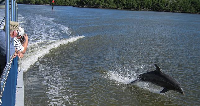Echte Delfin Show in den Everglades/Florida