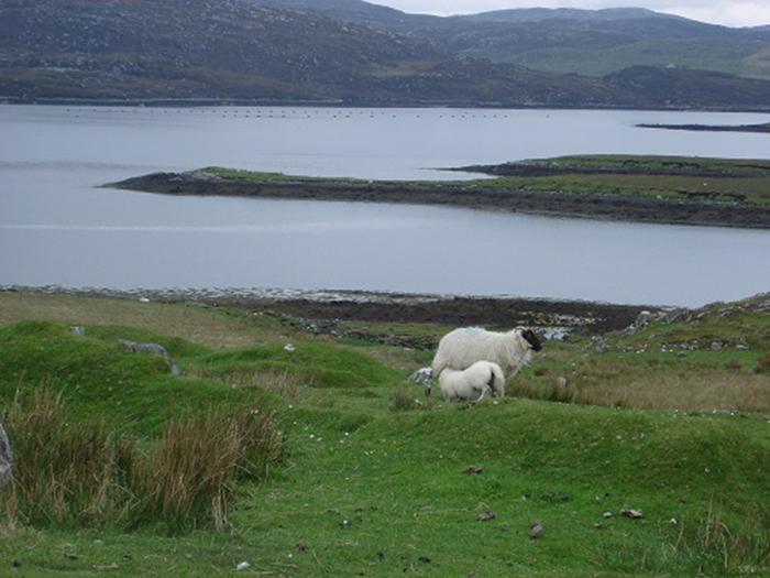Warum nicht mal nach Irland reisen