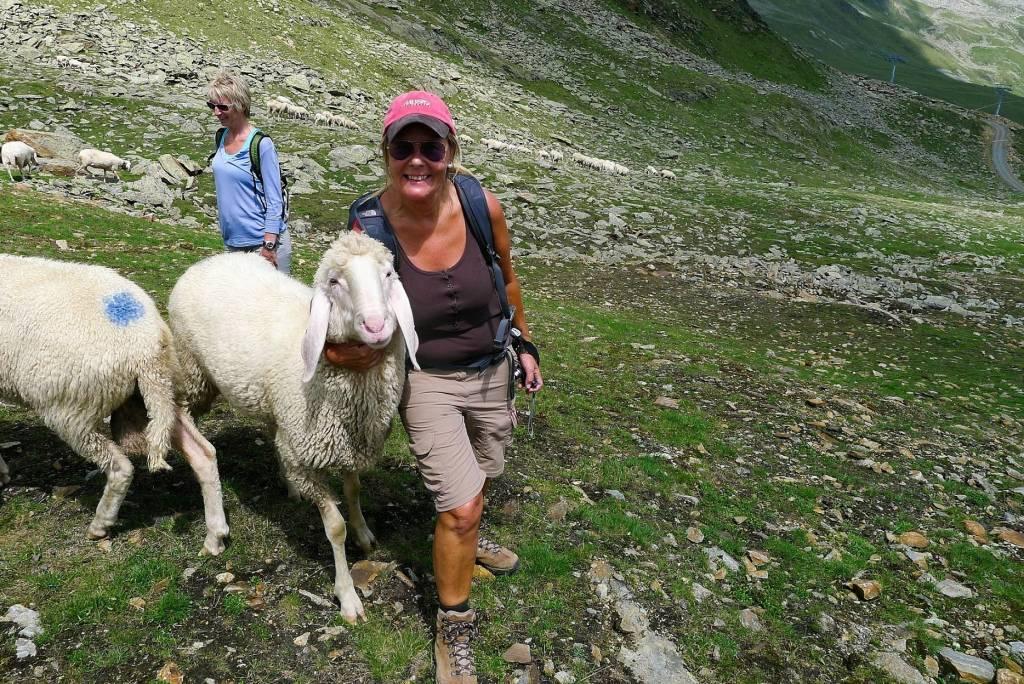 Wanderung zu den Bergschafen im Ötztal