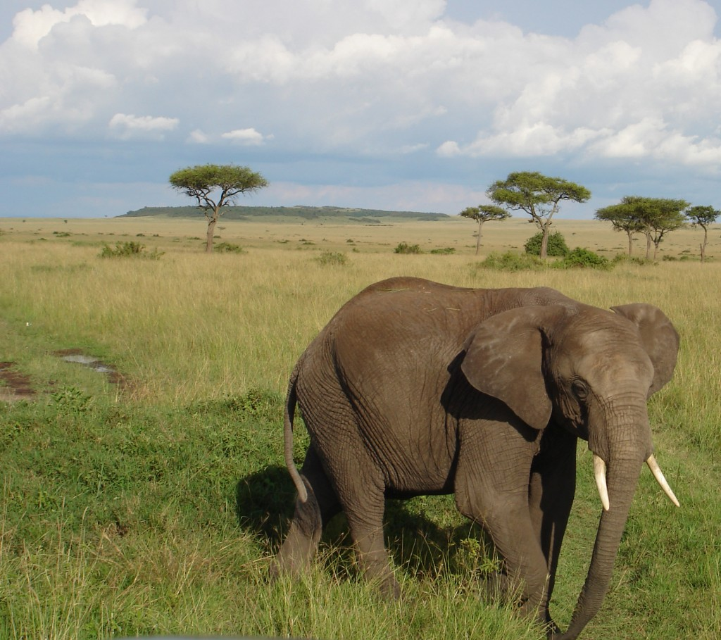 Kenia Safari Elefant