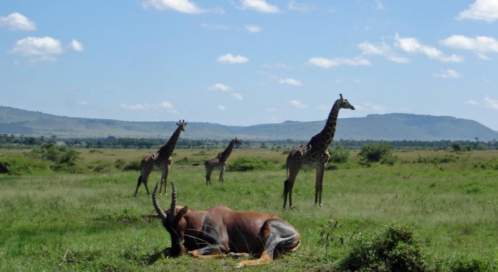 Fotosafari Kenia Giraffe Antilopel