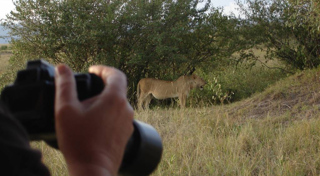 Safari Kenia Löwe