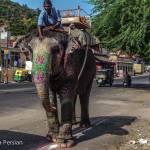 Ein Elefant zur Beförderung von Touristen kommt uns auf der Straße entgegen