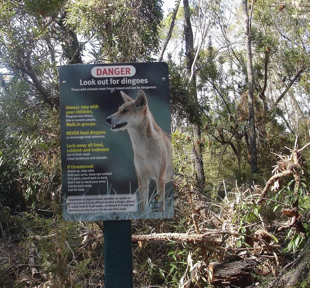Schild auf Fraser Island, hier wird vor Dingos warnt . @Foto: M.Persian