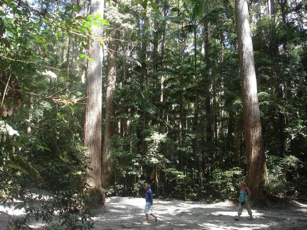 Wanderung im dichten Dschungel von Fraser Island @Foto: M. Persian