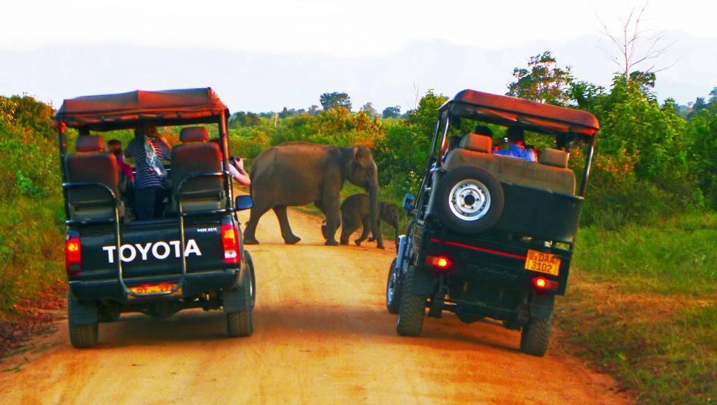 Jeep-Safari im Udawalawe Nationalpark: 400 Dickhäuter leben im Wildreservat