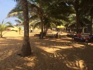 Mein Schattenplatz unter Palmen
