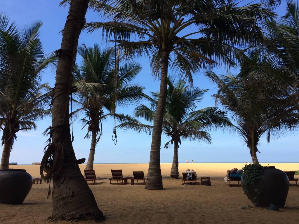 Zwischen den Palmen werden Seile gespannt auf denen die toddy Tapper von Baum zu Baum laufen