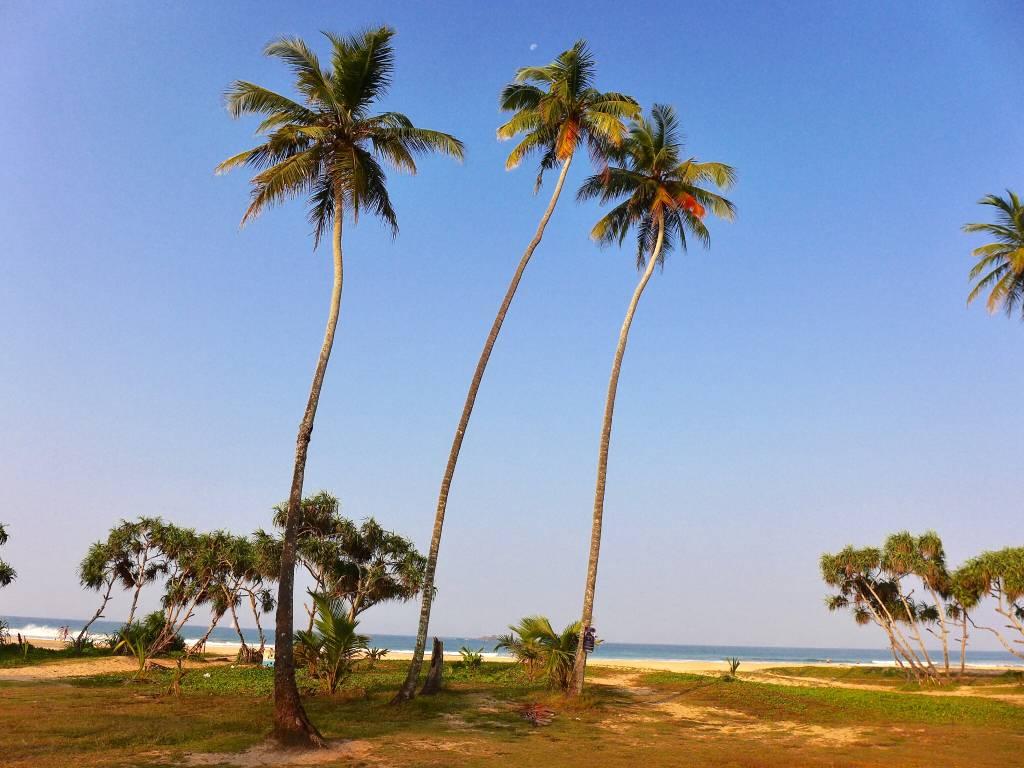 Strandidylle auf Sri Lanka